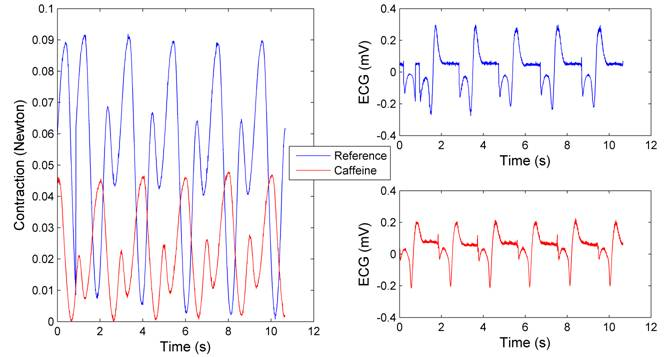 the affect of caffeine on pulse The effects of temperature on daphnia heart rate with  temperature on daphnia heart rate with reference abstracts  the effect of caffeine on the rate of.