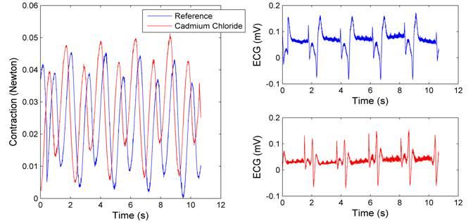 pilocarpine and heart rate