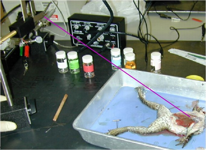 What is a frog's heart rate?